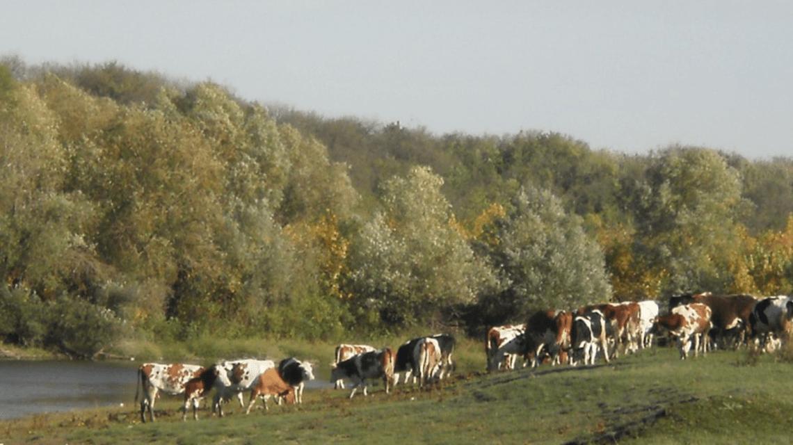 Sečanj, Vojvodina