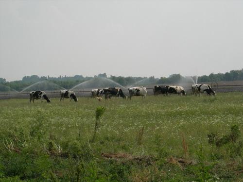 Vojvodina plain